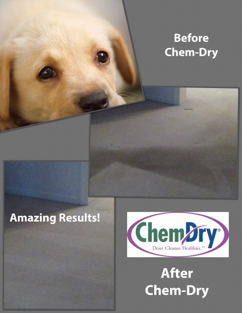 Call us for all your difficult spots, including oily dog spots!
