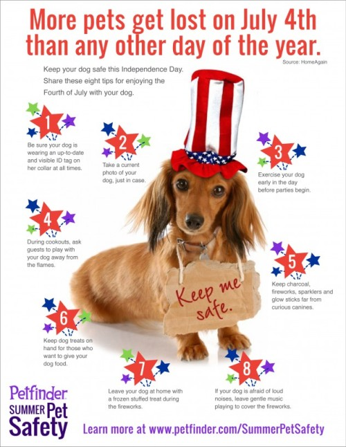 July 4 Tips for your Pet